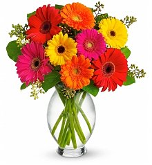 Flower Bouquets: Gerbera Brights Bouquet
